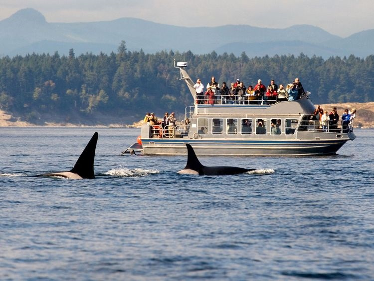 whale-watching-destinations_ss_001