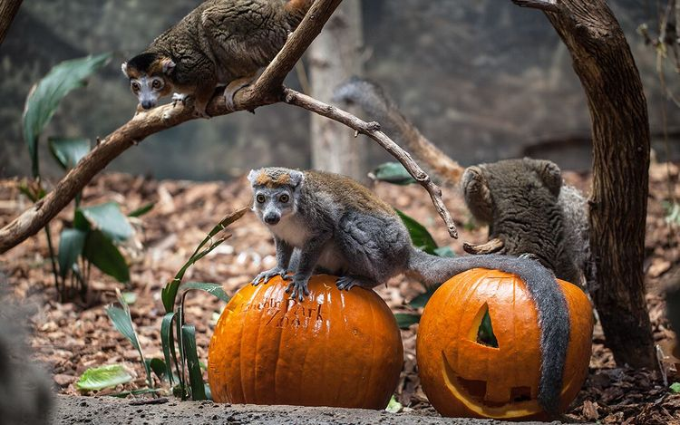 spooky-zoo-spectacular-chicago-il