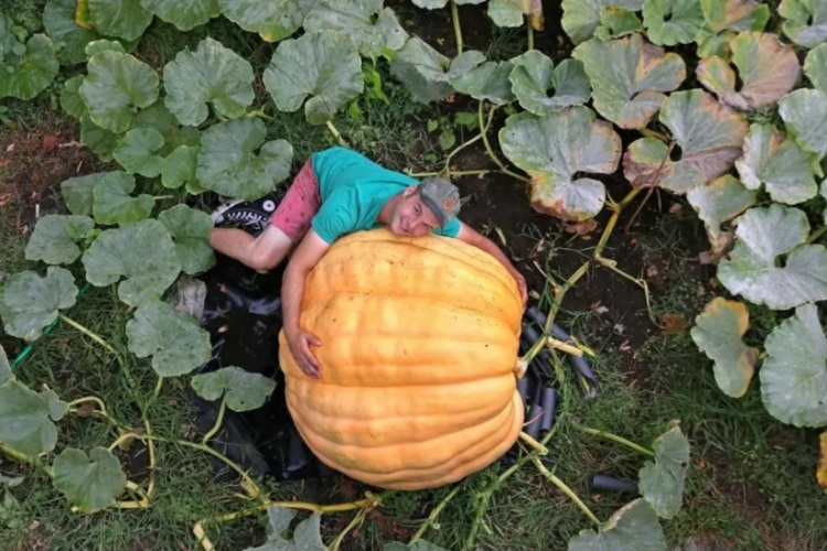 ryan_pumpkin1_met
